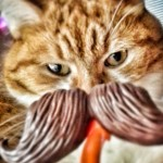 Our orange tabby Skittles with a fake hipster 'stache